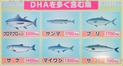 DHAを多く含む魚です