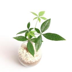 観葉植物を置きます