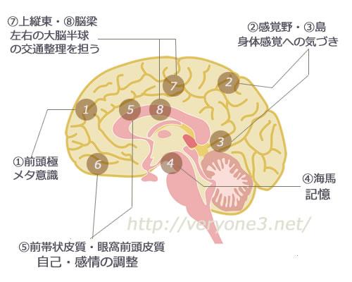瞑想は脳の部位の構造を変えます。