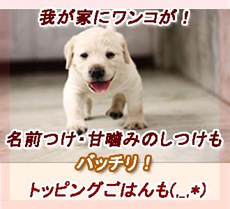 犬を飼うまとめです。