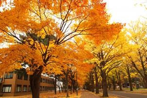 11月の紅葉並木です。