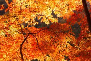 令和元年10月の九星占いです。